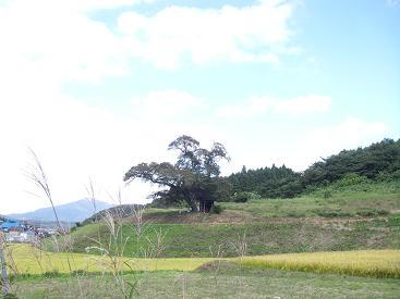 IMGP5771小沢の桜~4.JPG