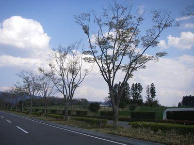 kap070503-keyaki.jpg