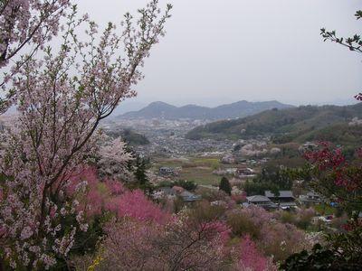 kap080417-hanamiyama.jpg